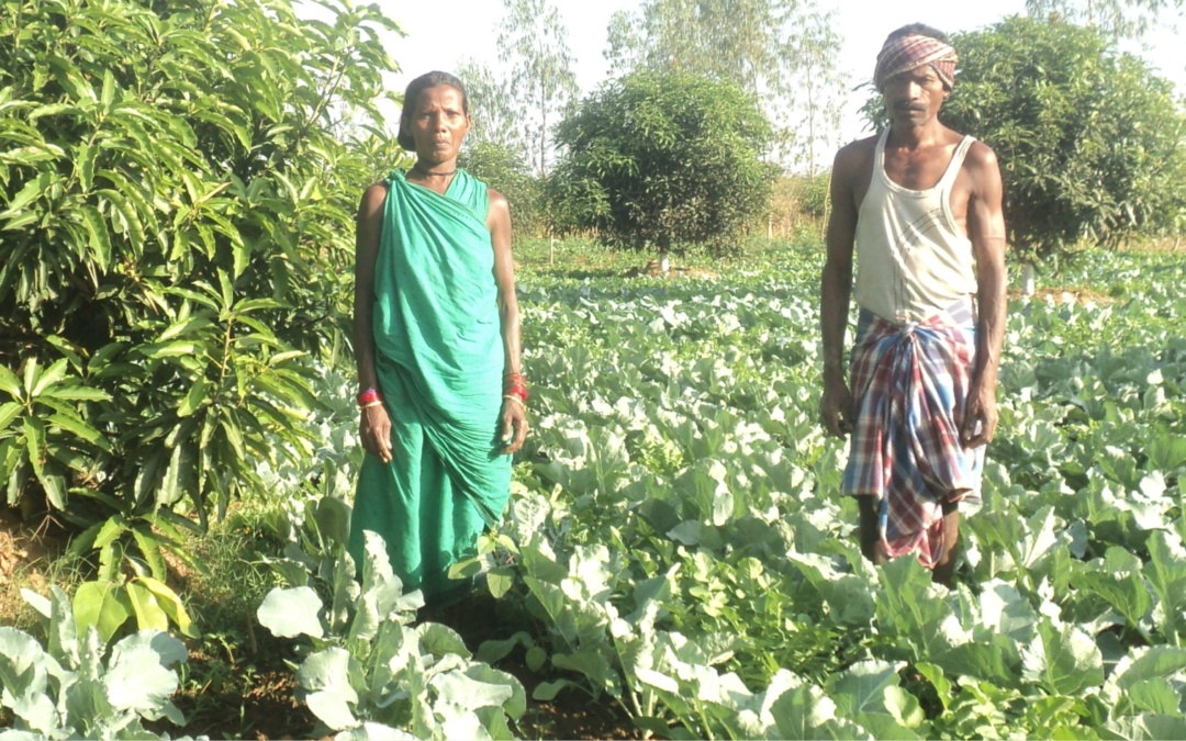 Vegetable Growers Double their Income